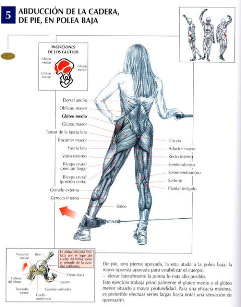 Ejercicios para tener gl teos perfectos for Ejercicios de gym
